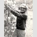 Picking beans, Tunbridge, VT