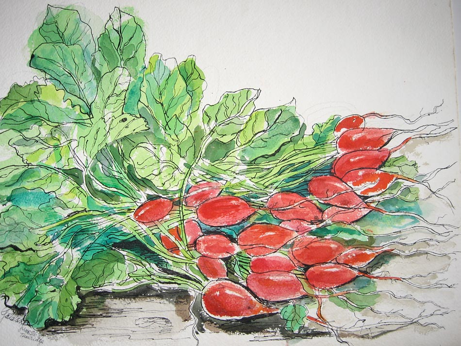 Radishes by Paul Galdone