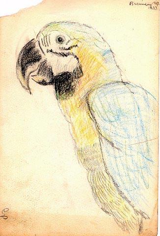 Zoo sketch by Paul Galdone